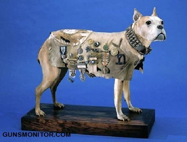 گروهبان استابی؛ مهمترین سگ جنگ جهانی!